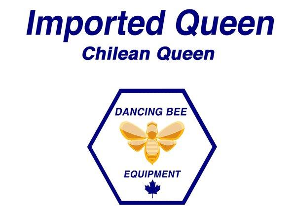 Queen Producer Chile